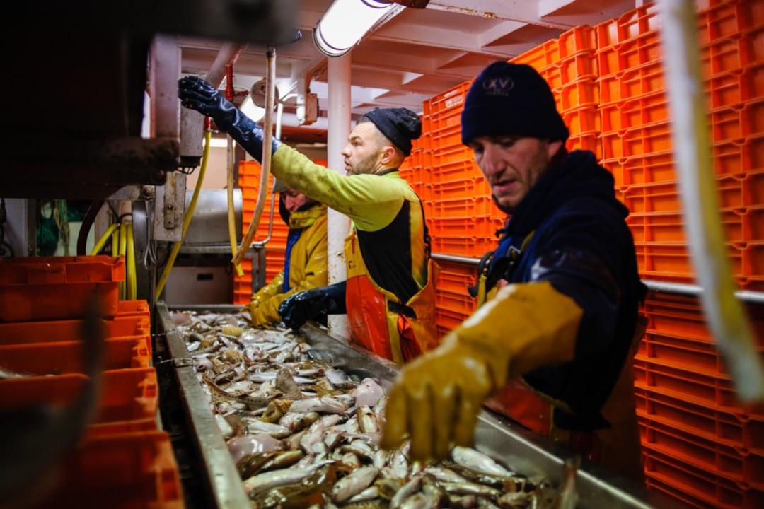 Pêche dans la Manche sur un chalutier